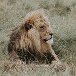 Las cualidades y defectos de Leo